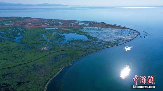 新疆博斯腾湖芦苇湿地绿意盎然美如画