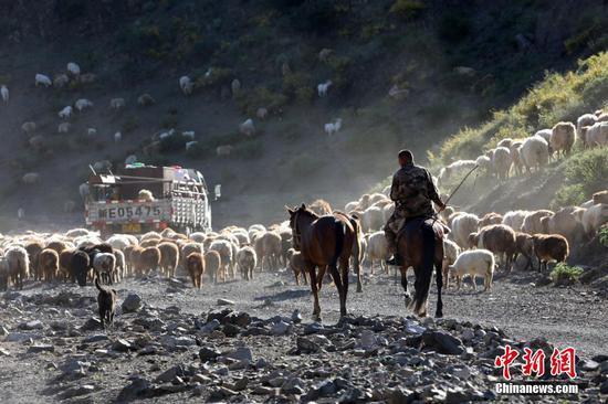 新疆博州:百萬牲畜開始轉場