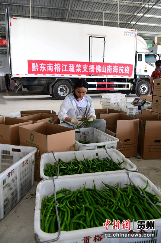 贵州榕江25吨爱心蔬果驰援广东佛山 助力抗疫加深东西部协作情谊