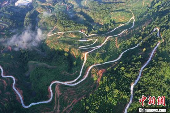图为从江县丙妹镇拍摄都柳江畔的百香果园风光?!∥獾戮?摄