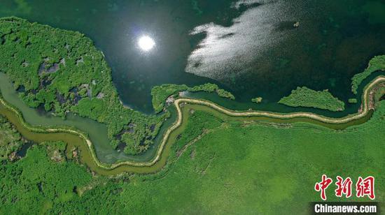 航拍新疆博斯騰湖蘆葦濕地:綠意盎然