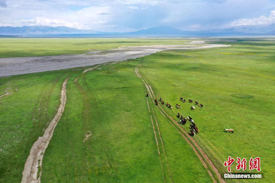 新疆博州:賽里木湖海西草原羊馬成群