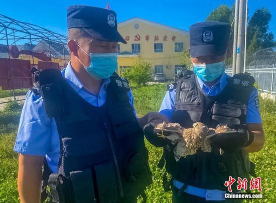 新疆民警救助國家二級保護動物紅隼