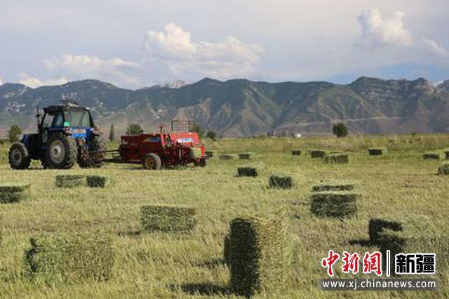 察布查尔县:红豆草展示一幅丰收画卷
