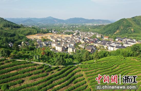 航拍杭州径山茶园 千亩基地孕育亿元财富