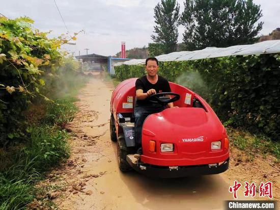"""周隨兵駕駛""""風送噴霧機""""在葡萄園內作業。他是常樂鎮葡萄產業的兩個帶頭人之一?!£懫顕z"""