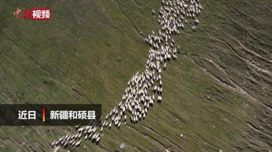 新疆南部十萬牲畜大轉場