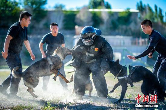 高温天气下 新疆民警锤炼警犬技术水平