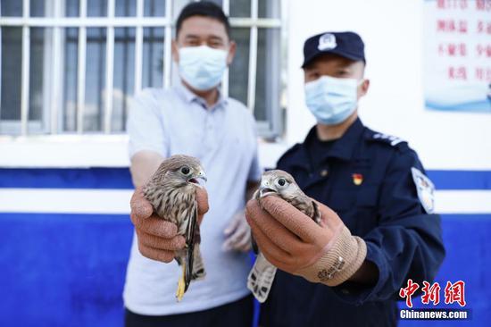 新疆民警救助兩只鷹隼幼崽
