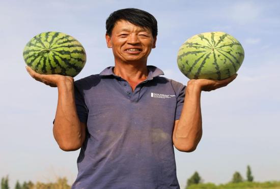 (图为:阿克提坎墩村村民吴绍文的西瓜迎来丰收季)