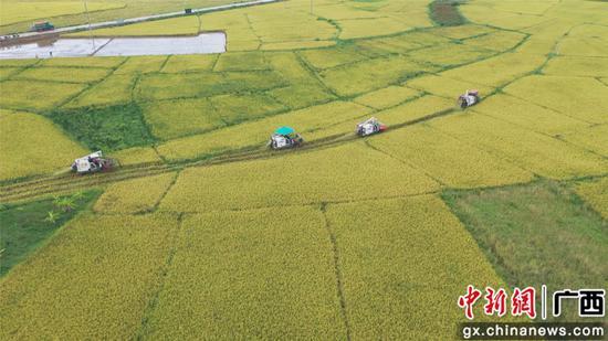横县:早稻开割迎丰收