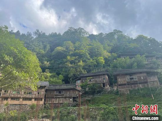 雷公山国家级自然保护区林海景色。刘文文 摄