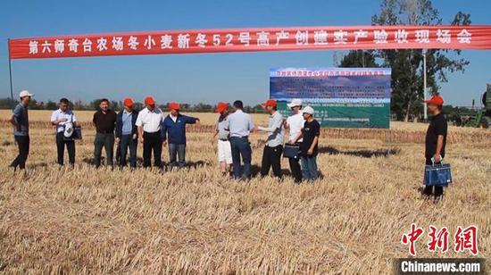 亩产858.72公斤!新疆兵团冬小麦再创高产记录