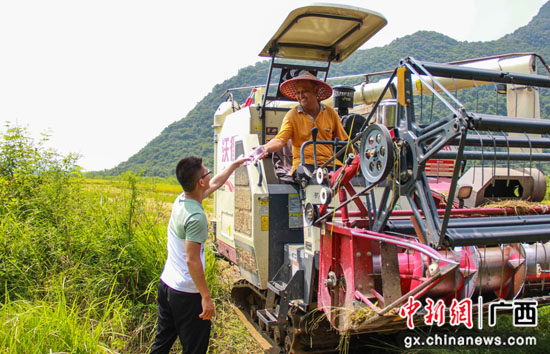 桂林临桂区农民冒酷暑抢收早稻 纪委监委田间地头送清凉