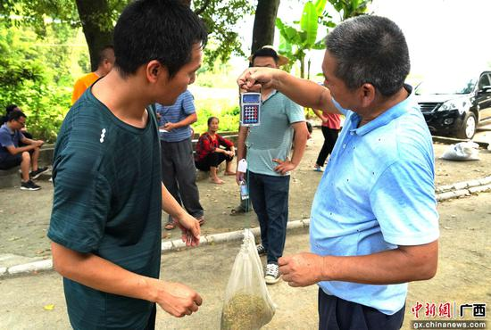 广西融水种植优质稻谷 助力乡村振兴