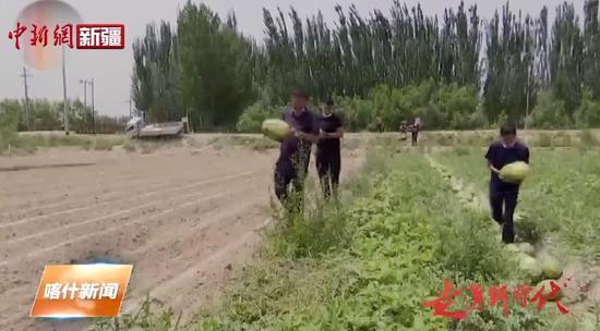 瓜果飘香产业兴旺 喀什瓜果走南闯北拓市场