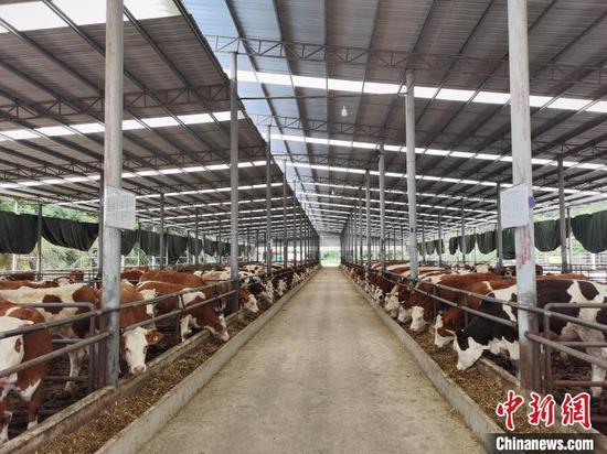 图为思南县肉牛养殖基地。 思南宣传部供图。