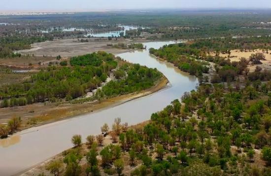 新疆尉犁:塔里木河畔生态画卷