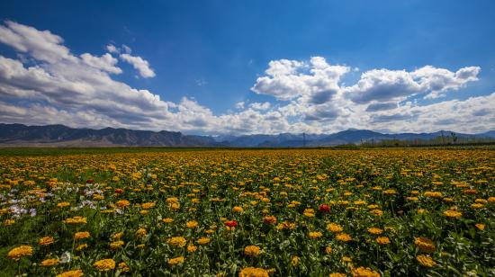 定眼望去,仿若人间仙境,彩蝶纷飞,蜜蜂起舞,一个个忙碌而又欢快的精灵,在花丛间穿梭往来,生机勃勃!