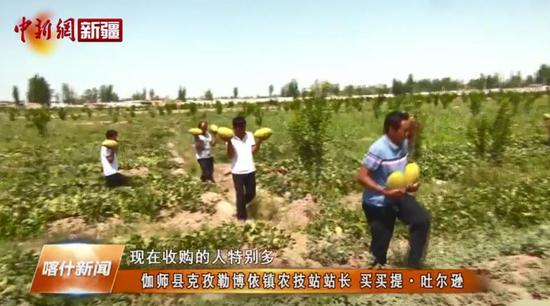 喀什伽师县26万亩伽师瓜种出的甜蜜产业