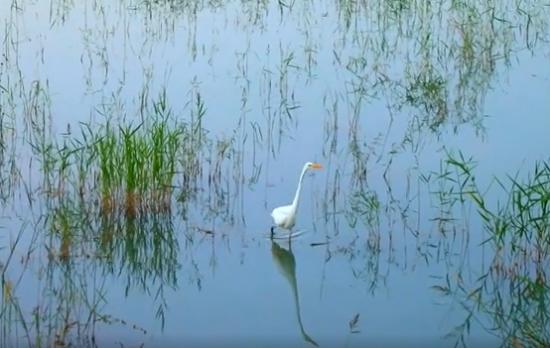 新疆昌吉门前有条河:生态和谐幸福河