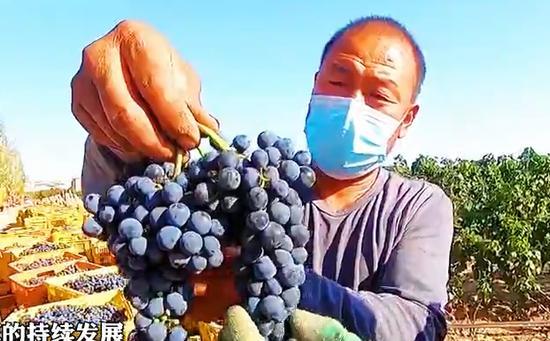 新疆昌吉:葡萄酒香天山外