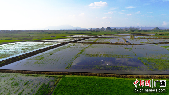 贵港港南区稻虾综合种养产业项目扎实推进