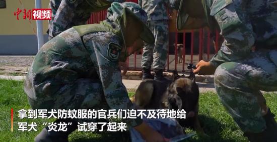 新疆边境军犬穿上定制防蚊服