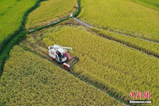 航拍农户在天柱县高酿大坝操作收割机收割部分成熟的水稻。 瞿宏伦 摄