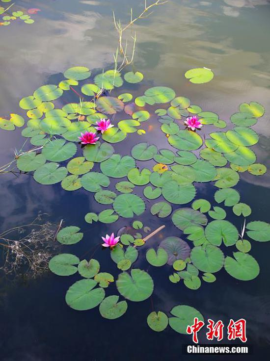 游客在湖中还可欣赏到当地少见的莲花。石晓坤 摄