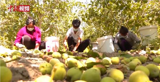 新疆南部核桃丰收促农民增收