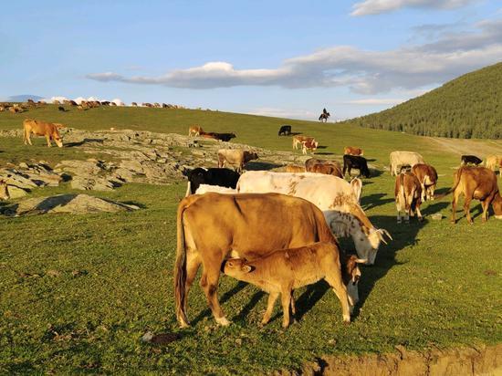 新疆阿勒泰那仁牧场静谧而美好