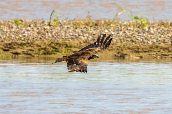飞翔在水面之上。