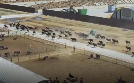 """探访新疆和静县戈壁里的""""牛""""乡村"""