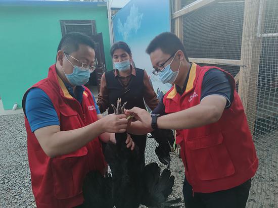 驻村工作队员上门为参与寄养的村民提供技术指导。