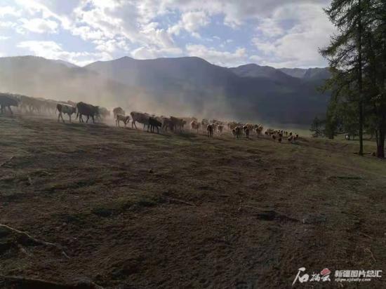 牧道转场路漫漫。 石榴云/新疆日报记者任江摄