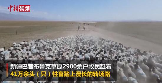 数万余只巴音布鲁克黑头羊转入秋季牧场