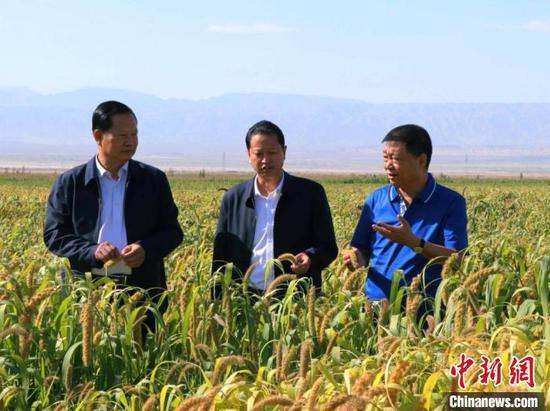 前来考察的多伦县委书记王延功(中)对谷子长势表示惊叹;对华凌牛业的发展表示钦佩,并称合作前景广泛。 胡嘉琛 摄
