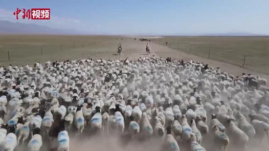 數萬余只巴音布魯克黑頭羊轉入秋季牧場