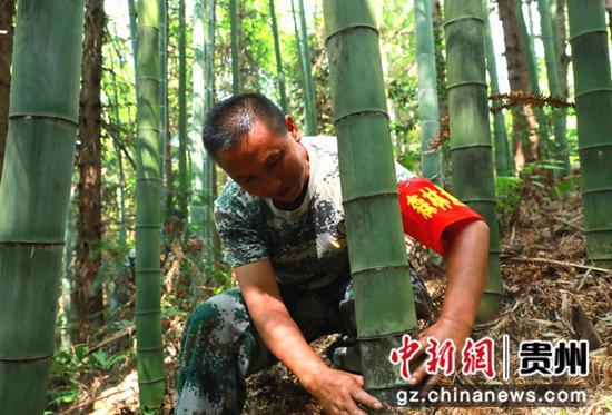 清镇:守护国有林场 构筑贵阳西部绿色屏障