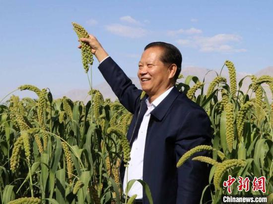 和静县委书记刘克文举着齐人高的谷子。 胡嘉琛 摄