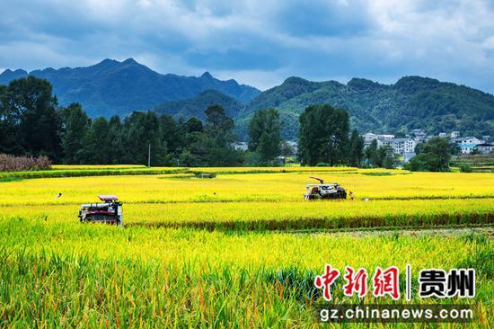贵州绥阳:喜看稻菽千重浪 诗乡大地丰收忙