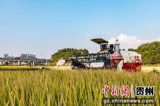 2021年9月14日,贵州省黔西市锦绣街道新民社区,村民驾驶收割机收割水稻