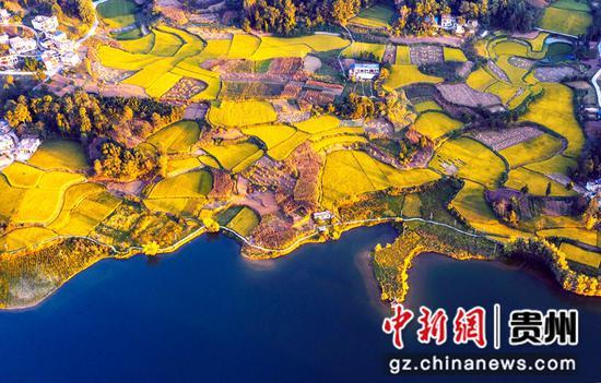 2021年9月11日拍摄的贵州省黔西市绿化乡大海子村稻田。