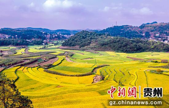 2021年9月13日拍摄的贵州省黔西市雨朵镇雨朵社区稻田。