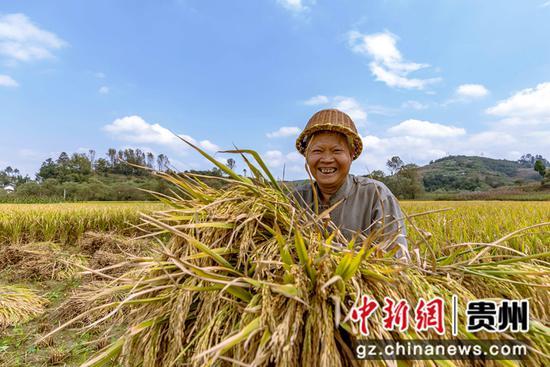 贵州黔西:大地丰收好秋景