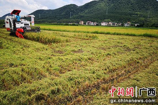 桂林灵川县三街镇发展特色产业 助力乡村振兴