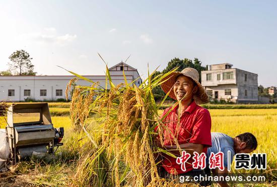 2021年9月14日,贵州省黔西市杜鹃街道大兴社区,村民在农田收割水稻。
