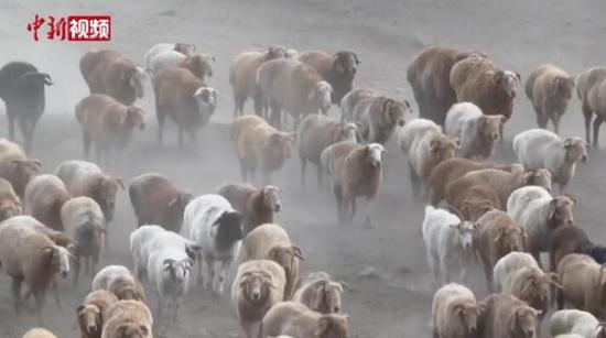新疆阿勒泰千里牧道牛羊轉場
