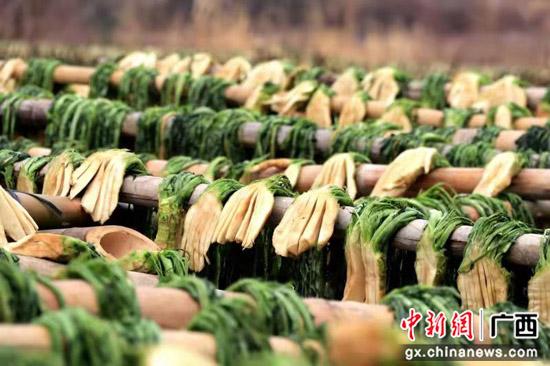 贺州钟山县红色古镇英家加速文旅产业发展